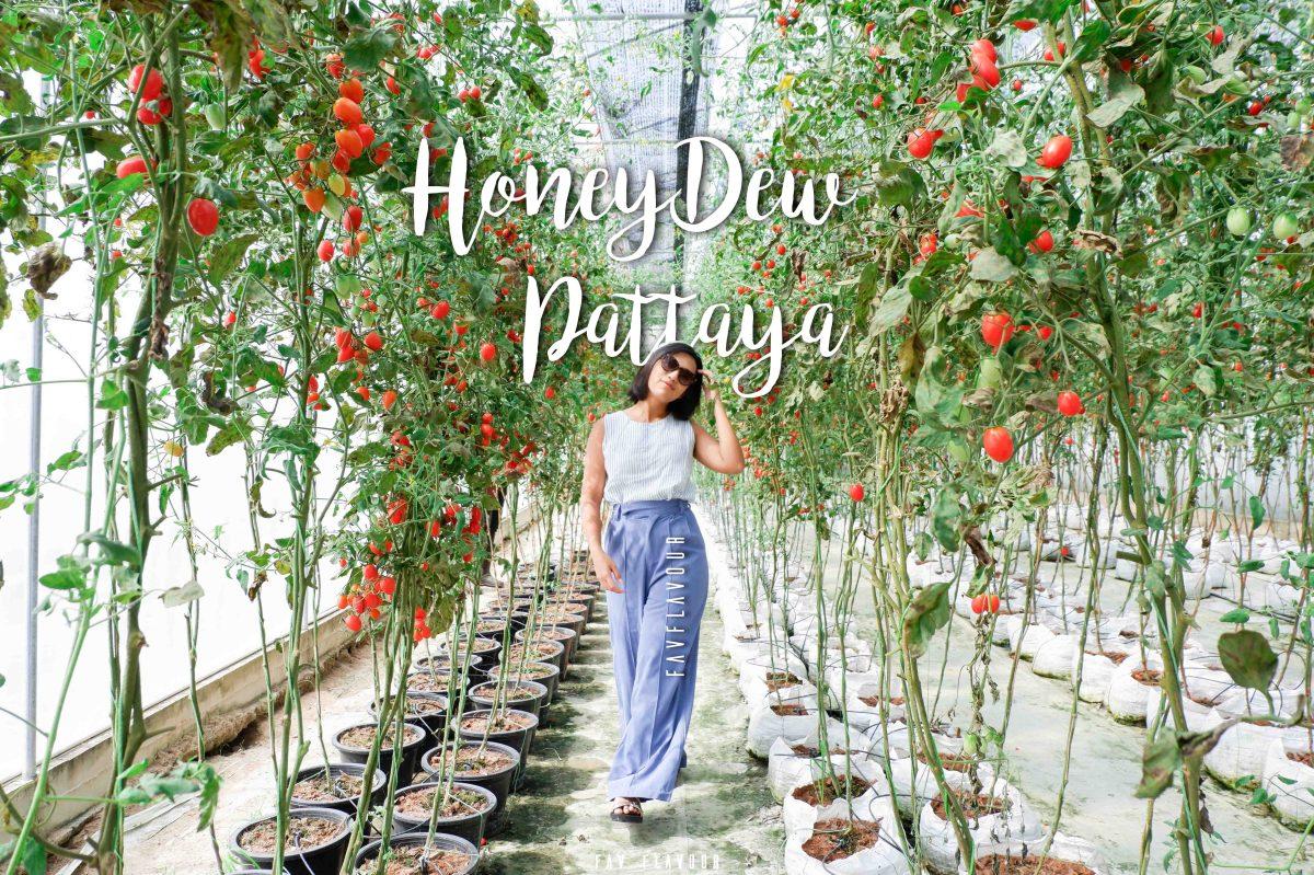 Honeydew Pattaya คาเฟ่ออแกนิคฟาร์ม (สุข) | FAVFlavour